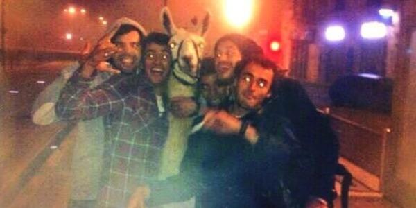 Ivres [virgule] ils font monter un lama dans le tram